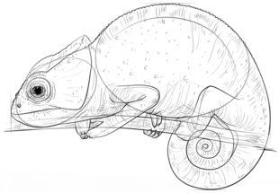 jak narysowa� kameleona krok po kroku rysowanie kameleona