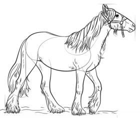 Konie Rysunek Krok Po Kroku