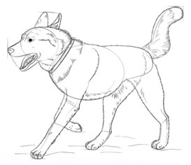 Jak Narysować Psa Husky Krok Po Kroku Rysowanie Psa Husky